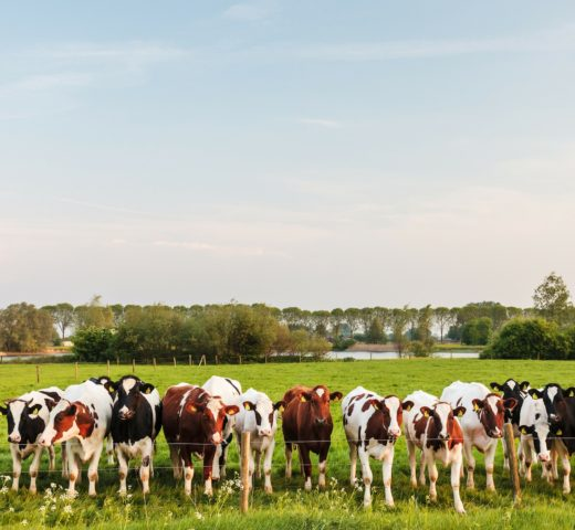 Is Animal Protein from Milk Bad?