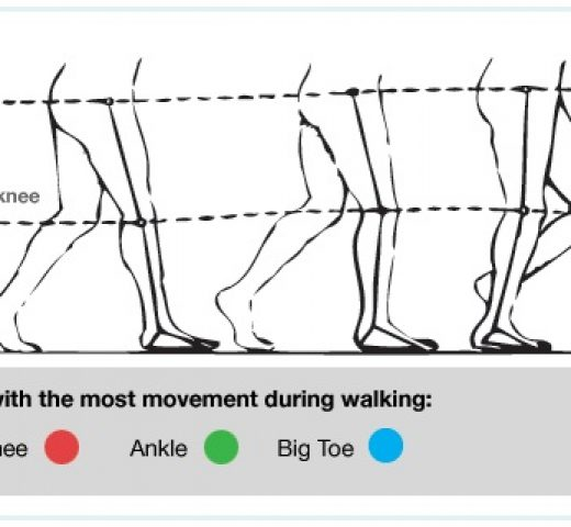 The Mechanics of Walking